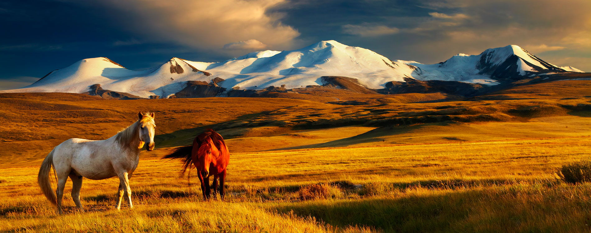 mongolia_tłumaczenia_angos